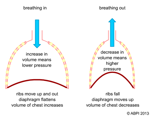 positive crankcase ventilation diagram how air moves into and out of the lungs - anatomy and ... ventilation diagram lungs